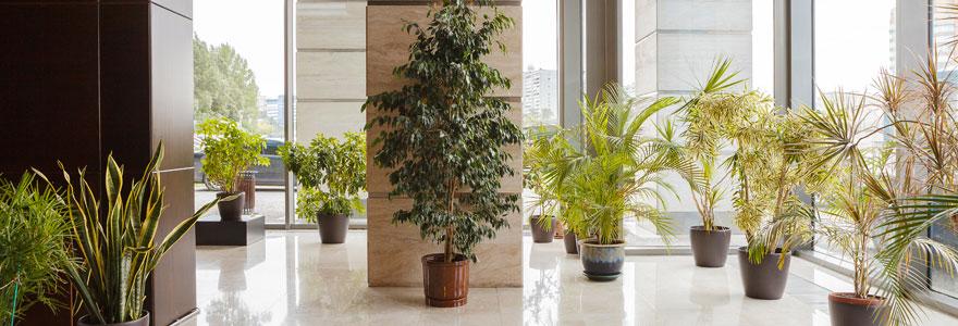 Décoration et aménagement végétal en entreprise